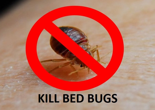 Image Result For Will Bleach Kill Bed Bugsa
