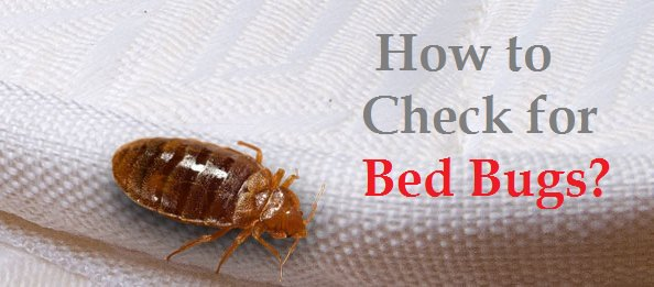How to check for bed bugs